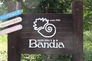 バンディア